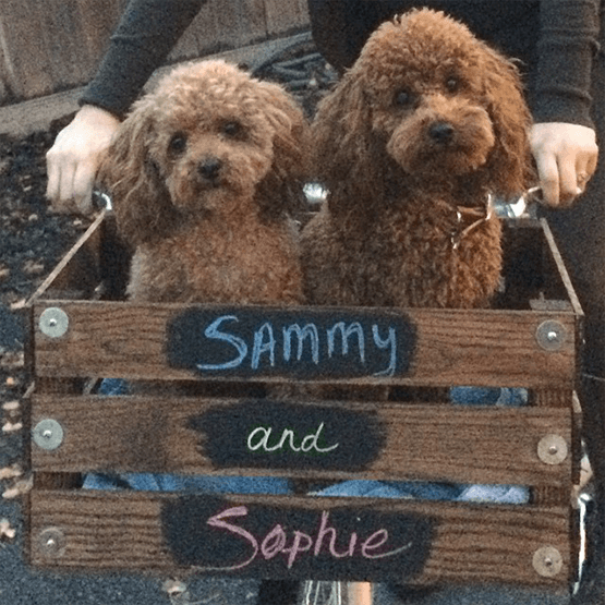 Sammy & Sophie Our Toy Poodles